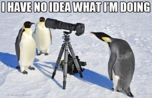 penguin photographer_edited