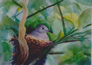 my painting of a dove on her nest in our grapefruit tree